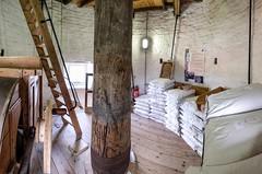 Holgate Windmill, June 2019 - 17