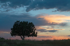 A Juniper Alone (theskyhawker) Tags: outdoors landscape sunset nature tree no people tranquil scene beauty in tooele county utah united states open
