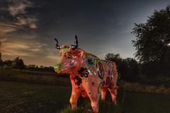 Night Ox (Tim Loesch) Tags: nightshot night oxen stars sky newjersey nj mercercounty longexposure