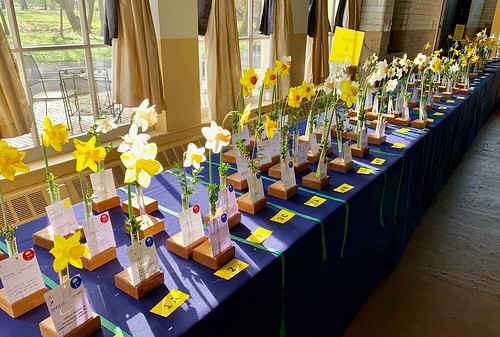 Little Garden Club of Rye Daffodil Show 2019