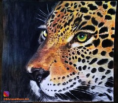 Ounce. Art By Silviane Moon. (Silviane Moon) Tags: drawing painting coloredpencil fabercastell chansonpaper realismo training onça ounce wildlife jungle silvianemoonart silvianemoon