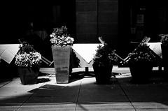 LeicaCLBerlin400CanonLTM5018July2019Exports-12 (chicago8c) Tags: leicacl trix400 analog canon50mm18ltm canonltm50mm18 chicago city classiclens film filmphotography illinois kodak kodaktrix leica leicathreadmount lomographyberlin400 ltm street streetphotography trix urban