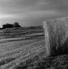 hay bales (patrickhanleyjr) Tags: rolleiflex trix