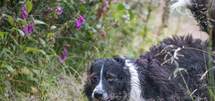 A Brief Encounter (JJFET) Tags: 29 52 weeks for dogs paddy