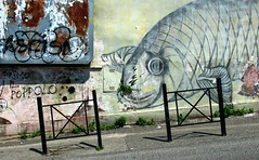 Primo Il Poppolo [en mode fish-eye] (Robert Saucier) Tags: rome roma pigneto graffiti streetart mur murale mural clôture fence rue street pavement poisson fish oblique tags pasolini accatone img6587