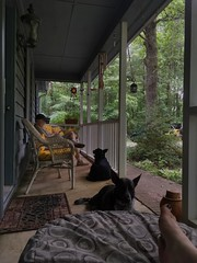 Southern Comfort (phthaloblu) Tags: lazysummerafternoon dogs birdwatching lemonade humid hot porchsitting home