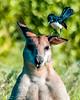 20170523-022b - Mutton Hole Wetlands_Photobook-Flickr.jpg (Brian Dean) Tags: nq 2017bookpicked caravaning slideshow 2017tour portfolio normanton muttonholewetlands facebook