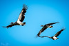 20170523-027 - Mutton Hole Wetlands_Photobook-Flickr.jpg (Brian Dean) Tags: nq flickrposted 2017bookpicked muttonholewetlands slideshow 2017tour facebook normanton caravaning portfolio