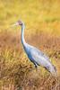20170526-079a-Karumba Wetlands_Photobook-Flickr.jpg (Brian Dean) Tags: nq birds 2017tour facebook 2017bookpicked karumbawetlands caravaning slideshow