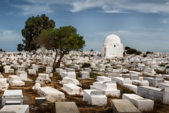Silence (Dr. Ernst Strasser) Tags: ifttt 500px arab arabic atmosphere cemetry clouds graves monastir quiet silence sky trees tunis tunisia ernst strasser unternehmen startups entrepreneurs unternehmertum strategie investment shareholding mergers acquisitions transaktionen fusionen unternehmenskäufe fremdfinanzierte übernahmen outsourcing unternehmenskooperationen unternehmensberater corporate finance strategic management betriebsübergabe betriebsnachfolge