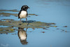 20170603-054-Camooweal Billabong_Photobook-Flickr.jpg (Brian Dean) Tags: nq 2017bookpicked caravaning slideshow camooweal 2017tour facebook flickr billabong birds