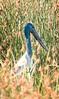 20170523-020a - Mutton Hole Wetlands_Photobook-Flickr.jpg (Brian Dean) Tags: nq flickrposted 2017bookpicked muttonholewetlands slideshow 2017tour facebook normanton caravaning