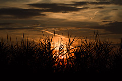 Sunset (Geryt86) Tags: colors trees natural nature canon canoneos7d canonphotography clouds yellow red sky