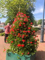 5R8A1026A (My Town Photography) Tags: haarlem northholland netherlands