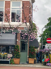 5R8A1134A (My Town Photography) Tags: haarlem northholland netherlands