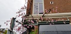 5R8A1134C (My Town Photography) Tags: haarlem northholland netherlands