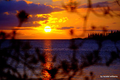 Sunset  by iezalel williams - Isle of Pines in New Caledonia - IMG_2383-004 - Canon EOS 700D (iezalel7williams) Tags: sunset sky natural photo beautiful sea sun scenary beauty nature newcaledonia planetearth purple orange yellow shadow reflection pinetrees plant high vibration view seawater silhouette clouds colorful light love isleofpines