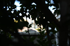 Spying (stalkertoow) Tags: spying leaves neighbours 2019 201