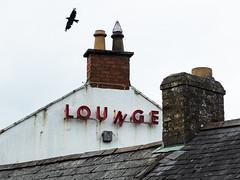Lounge (Stoneybutter) Tags: ireland pub signage clonee cloneecountymeath mcdonaldspubclonee neon neonsignage crow
