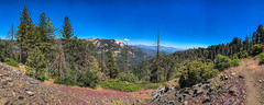 Panoramic view from the Sugar Bowl Trail