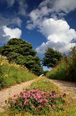 Green Lane (PJ Swan) Tags: green lane track road clover durham wingate quarry