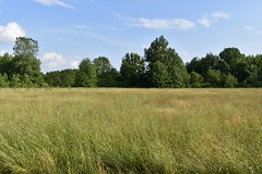 Indian Hollow Field (Myusername432) Tags: park reservation field meadow grass evening sky nature plants ohio
