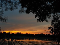 Sunrise Reflections in Phon Phisai 2019-7-21 3 (SierraSunrise) Tags: thailand phonphisai nongkhai isaan esarn sunrise sky skies reflections