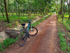 Red roads in the Rubber 1 (SierraSunrise) Tags: roads red dirt unpaved bicycle rubber plantation euphorbiaceae thailand isaan phonphisai esarn nongkhai