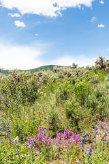 Avon, Colorado (DanGarv) Tags: d810 colorado vailcolorado avoncolorado
