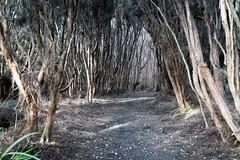 20190710-004630.jpg (_pjmonline) Tags: sonyilce7rm3 newzealand ilce7rm3 2019 sony travelphotography invercargill southlandregion