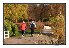 scandinavian walk ... (harrypwt) Tags: harrypwt helsinki finland canon 40d 18200 borders framed fall autumn trees people