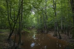 Congaree (Ramen Saha) Tags: congaree congareenationalpark nationalpark southcarolina cedarcreek congareeriver ramensaha forest green