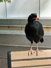 National Aviary -Kathy (KathyCat102) Tags: ppgindustries pittsburgh pa pennsylvania iphonex nationalaviary