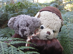Paddington and Scout Amid the Ferns (raaen99) Tags: paddington paddingtonbear paddybear paddy teddy teddybear bear softtoy vintage vintageteddy vintageteddybear vintagetoy handmade softie plush cute cuddly soft present gift wrapping ribbon box bow scout scoutbear cuddle hug littlebearhug biglittlebearhug knitting knitted knittedtoy fairtrade fairtradebear scouthouse mink collar minkcollar fur minkfur minkfurcollar pelt minkpelt 1930s 30s wrap vintagefur vintagefurcollar vintageminkfurcollar stanleypark waterfallpaddock paddock park recreation australian australiana nativeflora nativetree gum gumtree fern nature mountmacedon macedon victoria australia salisburyrd salisburyroad bushland australianbushland