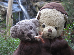 Paddington and Scout at the Stanley Falls (raaen99) Tags: paddington paddingtonbear paddybear paddy teddy teddybear bear softtoy vintage vintageteddy vintageteddybear vintagetoy handmade softie plush cute cuddly soft present gift wrapping ribbon box bow scout scoutbear cuddle hug littlebearhug biglittlebearhug knitting knitted knittedtoy fairtrade fairtradebear scouthouse mink collar minkcollar fur minkfur minkfurcollar pelt minkpelt 1930s 30s wrap vintagefur vintagefurcollar vintageminkfurcollar stanleypark waterfallpaddock paddock park recreation australian australiana nativeflora nativetree gum gumtree fern nature mountmacedon macedon victoria australia salisburyrd salisburyroad bushland australianbushland waterfall stanleywaterfall
