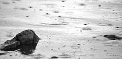 The Lake District in Miniature (@WineAlchemy1) Tags: lake water rain splash bassenthwaite shoreline monochrome blackandwhite blancoynegro noiretblanc nerosubianco rock cumbria lakedistrict englishlakes lakeland