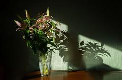Shadow Lilies (HonleyA) Tags: flowers shadows ricohgr2 gr2