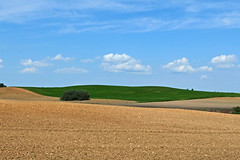 Fields (Tery14) Tags: field plowing sky blue curves
