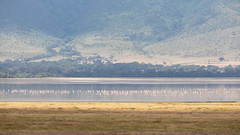 (Markus Hill) Tags: arusha tansania ngorongoro crater krater safari 2019 travel canon africa tanzania landscape nature animal flamingo lake