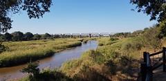 Skukuza Rail Bridge (Rckr88) Tags: krugernationalpark southafrica kruger national park south africa skukuza rail bridge skukuzarailbridge skukuzarailbridges bridges river rivers sabie sabieriver nature outdoors water