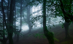 URKIOLA (juan luis olaeta) Tags: paisajes landscape forest bosque basoa hayedo pagoa tree laiñoa nieblas fog foggy photoshop lightroom raw urkiola basquecountry