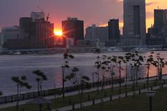 Tokyo Bay Sunset (seiji2012) Tags: japan tokyo tokyobay sunset cityscape 東京湾 豊洲ふ頭 豊洲ぐるり公園 日没