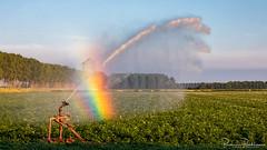 Irrigation rainbow (BraCom (Bram)) Tags: 169 bracom bramvanbroekhoven goereeoverflakkee holland nederland netherlands southholland stellendam zuidholland aardappels agriculture avond beregenboog bomen boom dijk dike evening irrigation landbouw landscape landschap potatoes rainbow regenboog sky summer tree trees widescreen zomer