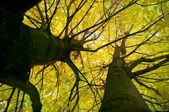 L'aventure intérieure (Atreides59) Tags: trees france tree green nature k yellow 30 pentax vert arbres lille arbre nord atreides jaunes k30 pentaxart atreides59 cedriclafrance