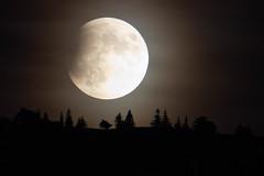 L'éclipse - the eclipse (gopillentes) Tags: éclipse lune hautdoubs nuit ombres eclipse moon france mountain shadows épicéas spruces mood ambiance fear peur