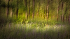 an impression of Kinclaven Wood | Kinclaven Wood | Perthshire (Weir View) Tags: photo landscape icm impressionist woodland bluebells may spring morninglight kinclavenwood perthshire scotland