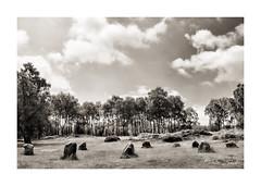 The Nine Ladies (2) (PeteZab) Tags: stonecircle nineladies derbyshire england ancient monument bronzeage stantonmoor blackandwhite bw toned monochrome