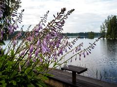 After rain (Alexx053) Tags: mzuiko17mmf18 flowers em10iii olympus m43 microfourthirds