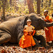 Monk or Novices studying. Two novices read a book, and a large elephant with forest background, Tha Tum District, Surin, Thailand