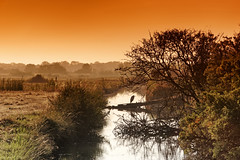 Gray heron in Angoute swamp (hbensliman.free.fr) Tags: bird sunrise swamp landscape travel nature charentemaritime heron france europe savage canal earth